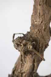Herbert Meusburger: Bronzeabguss einer 60-jährigen Weinrebe aus Perchtoldsdorf, Detail (Foto: Petra Rainer)