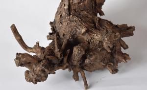 Herbert Meusburger: Bronzeabguss einer 60-jährigen Weinrebe aus Perchtoldsdorf, Detail (Foto: Karlheinz Pichler)